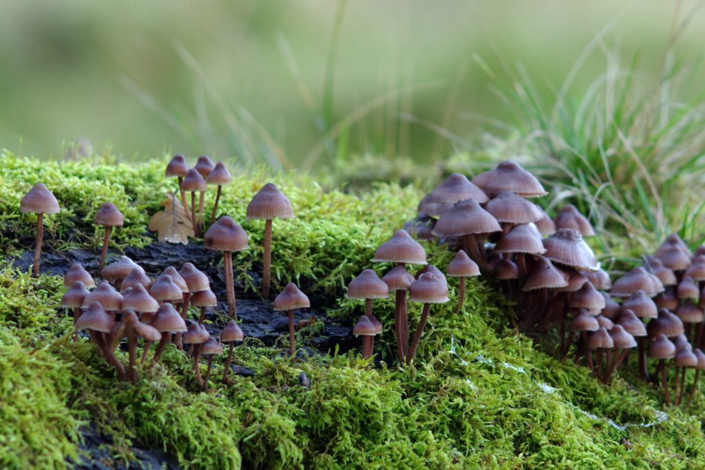 mushrooms or fungi and moss